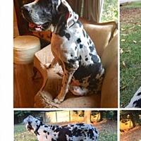 Adopt A Pet :: Clarabelle - Longview, TX