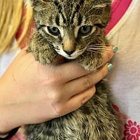 Adopt A Pet :: Gru - Island Park, NY