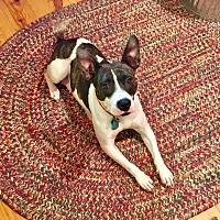 Adopt A Pet :: Hope - Bastrop, TX