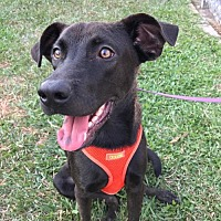 Adopt A Pet :: Hei Mai - Richmond, BC