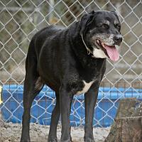 Adopt A Pet :: Nora - Key Biscayne, FL