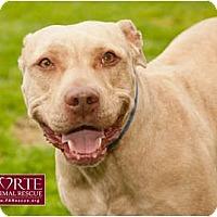Adopt A Pet :: Dior - Marina del Rey, CA