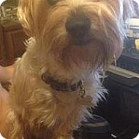 Adopt A Pet :: Reese - Orange, CA