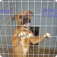Adopt A Pet :: Barney Pal - Windsor, MO