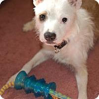 Adopt A Pet :: Mary - Marlton, NJ