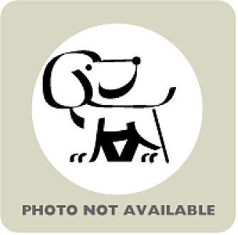 Coonhound/Labrador Retriever Mix Puppy for adoption in Janesville, Wisconsin - Austin