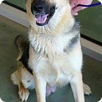 Adopt A Pet :: Minnie - Fort Worth, TX