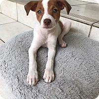 Adopt A Pet :: Kinder - Middlesex, NJ