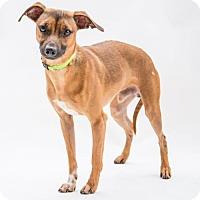 Terrier (Unknown Type, Medium) Mix Dog for adoption in Alpharetta, Georgia - Lake