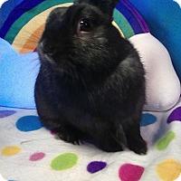 Adopt A Pet :: Critter - Trenton, NC