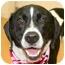 Photo 4 - Hound (Unknown Type)/Pointer Mix Dog for adoption in Cincinnati, Ohio - Lighting