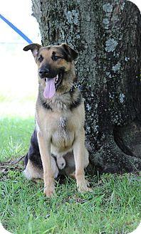 German Shepherd Dog Dog for adoption in Portland, Maine - Helmut