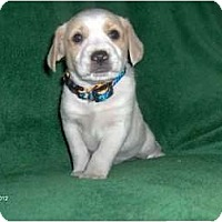 Adopt A Pet :: Jimmy - Clayton, OH