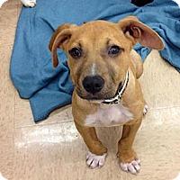 Adopt A Pet :: Cara - Silsbee, TX