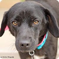 Adopt A Pet :: Whitney - Homewood, AL