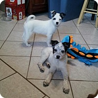 Adopt A Pet :: 1girl & 1 boy - Denver, IN