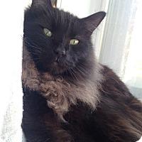 Adopt A Pet :: Franklin - St. Louis, MO