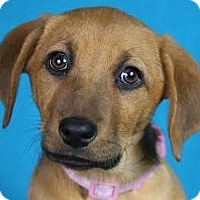 Adopt A Pet :: Fancy - Minneapolis, MN