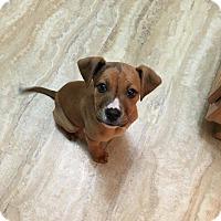 Adopt A Pet :: Tucker - Winchester, VA