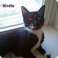 Adopt A Pet :: Birdie - Bentonville, AR