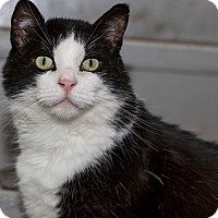 Adopt A Pet :: Oreo - Lombard, IL
