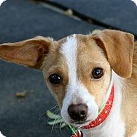Adopt A Pet :: Stella - Winters, CA
