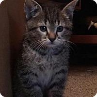 Adopt A Pet :: Blaze - Evans, WV