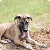 Adopt A Pet :: Kim - Dacula, GA
