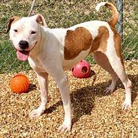 Adopt A Pet :: DAISY - Augusta, GA