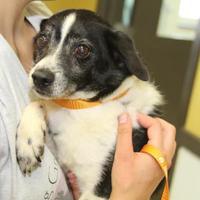 Adopt A Pet :: Ralph - Bowling Green, KY