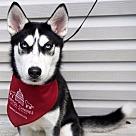 Adopt A Pet :: Jewel *Has Application*