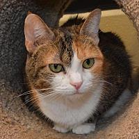 Adopt A Pet :: Odette - Cincinnati, OH