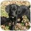 Photo 3 - Labrador Retriever Mix Puppy for adoption in Jacksonville, Florida - Mosley
