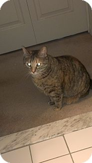 Domestic Shorthair Cat for adoption in Columbia, Maryland - COURTESY POST Rayne