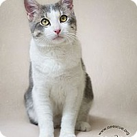 Adopt A Pet :: River - Phoenix, AZ