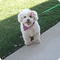 Adopt A Pet :: Mattisen - Stockton, CA