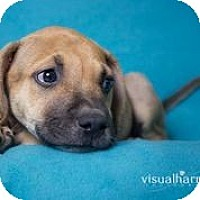 Adopt A Pet :: Buffy - Phoenix, AZ