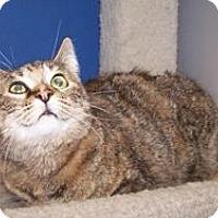 Adopt A Pet :: Betsy - Colorado Springs, CO