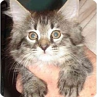 Adopt A Pet :: Rowdy - Chesapeake, VA