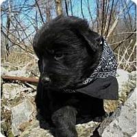Adopt A Pet :: Bubba - Rigaud, QC