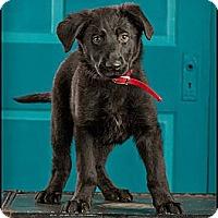 Adopt A Pet :: Bex - Owensboro, KY