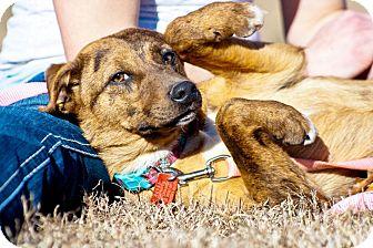 Feist/Feist Mix Dog for adoption in Perryville, Missouri - Jul