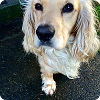 Adopt A Pet :: KING - Tacoma, WA