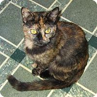Adopt A Pet :: Kit - Norwich, NY