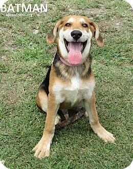 German Shepherd Dog/Hound (Unknown Type) Mix Dog for adoption in Elizabeth City, North Carolina - Batman