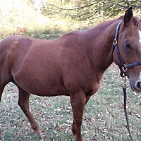 Quarterhorse Mix for adoption in cumming, Georgia - Soul