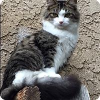 Adopt A Pet :: E V A - Brea, CA