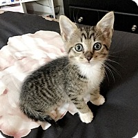 Adopt A Pet :: Louie $75 - Seneca, SC