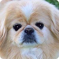 Adopt A Pet :: BRADY & BOOMER(FATHER & SON! - Wakefield, RI