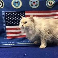 Adopt A Pet :: KYLA - Fort Collins, CO